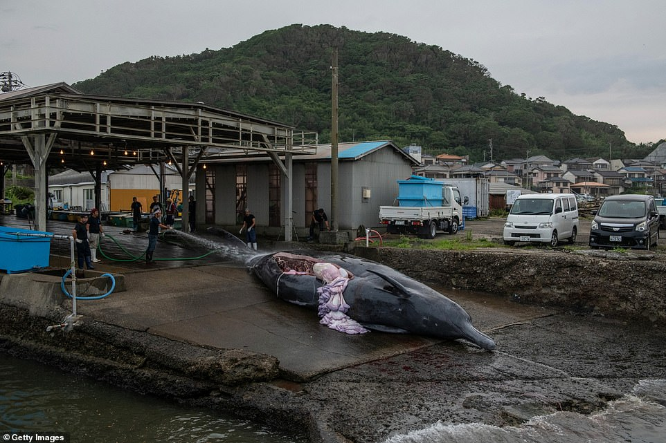 japan kills whales again, japan kills whales again july 2020