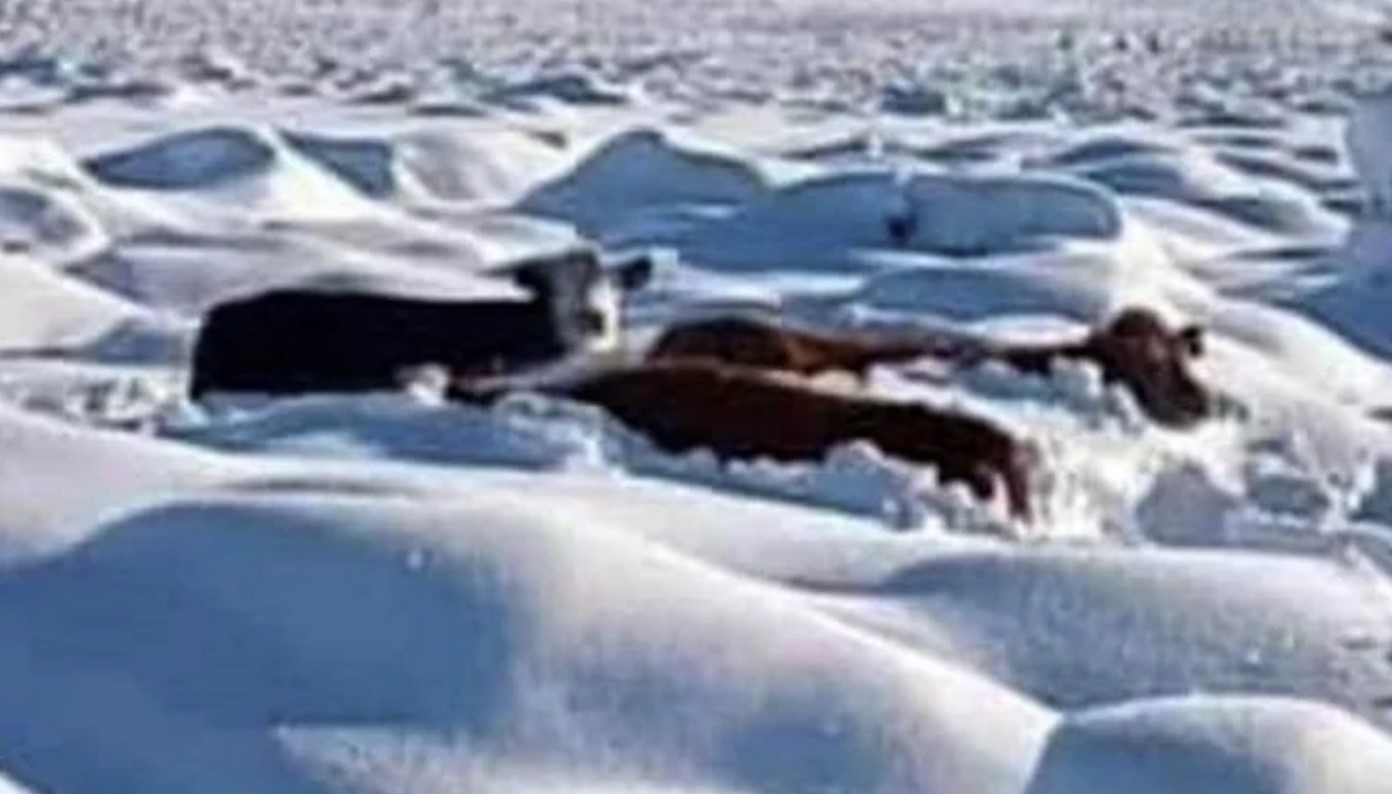 Can you imagine even trying to walk through snow up to your chin? Picture: Clarin