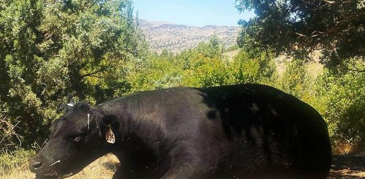 cow mutilation oregon, new case of cow mutilation oregon, cow mutilation oregon july 2020, cow mutilation oregon august 2020