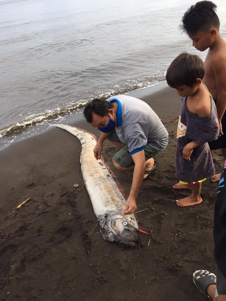 oarfish philippines earthquake, oarfish philippines earthquake august 2020, oarfish philippines earthquake pictures