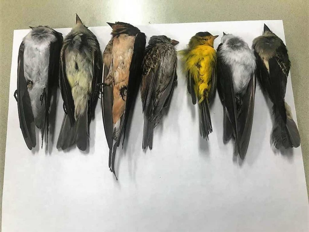 new mexico dead birds, bird death new mexico, thousands of birds die in New Mexico, why are birds dying in New Mexico