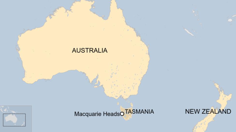 Australia whales: 90 dead in mass stranding off Tasmania