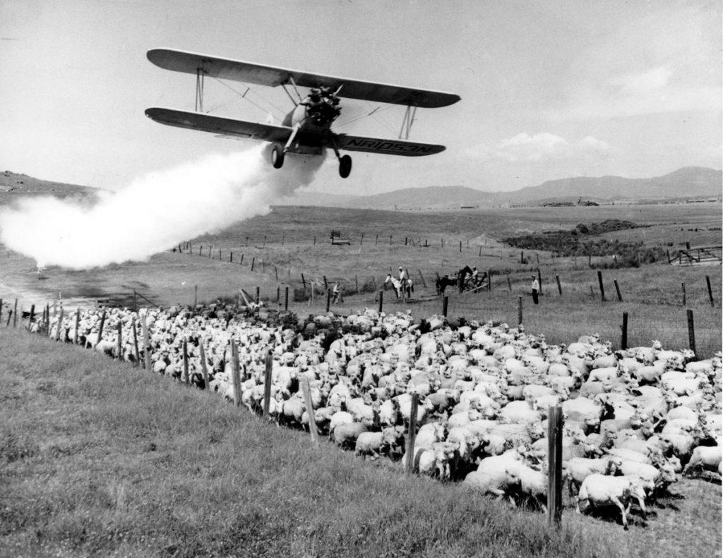 DDT, DDT LA, DDT los angeles, los angeles DDT pollution