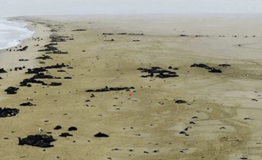 More than 5,000 dead seal pups on beach in Namibia