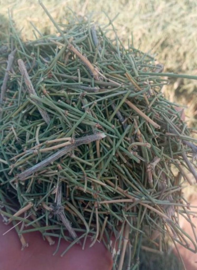 Commonly-found plant ephedra is being used to produce methamphetamine in Afghanistan, Afghanistan crystal meth, Afghanistan methamphetamine