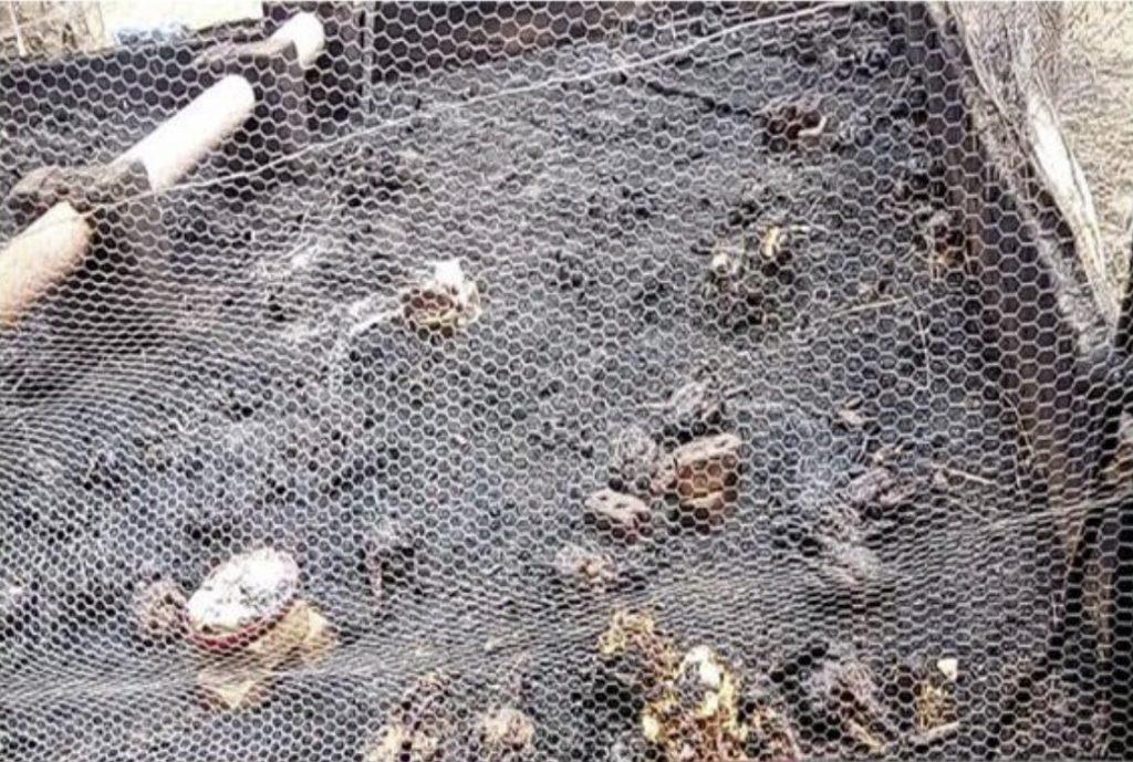 1000 chicken killed by lightning in Zimbabwe
