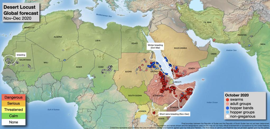 somalia locust plague november 2020