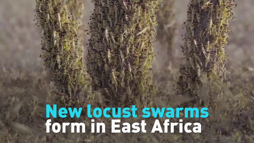 Second wave of biblical locust swarms hit East Africa, Second wave of biblical locust swarms hit East Africa december 2020, Second wave of biblical locust swarms hit East Africa video, Second wave of biblical locust swarms hit East Africa pictures