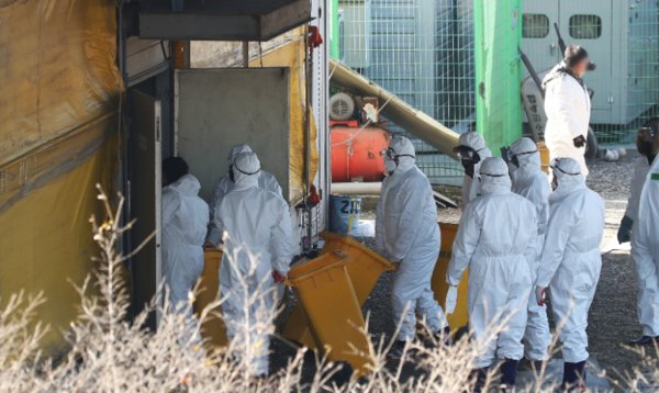 South Korea bird flu outbreaks