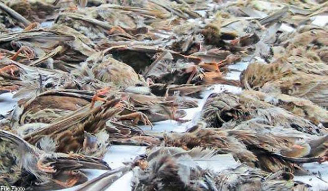 Dead birds mysteriously fall from the sky in India and Sri Lanka