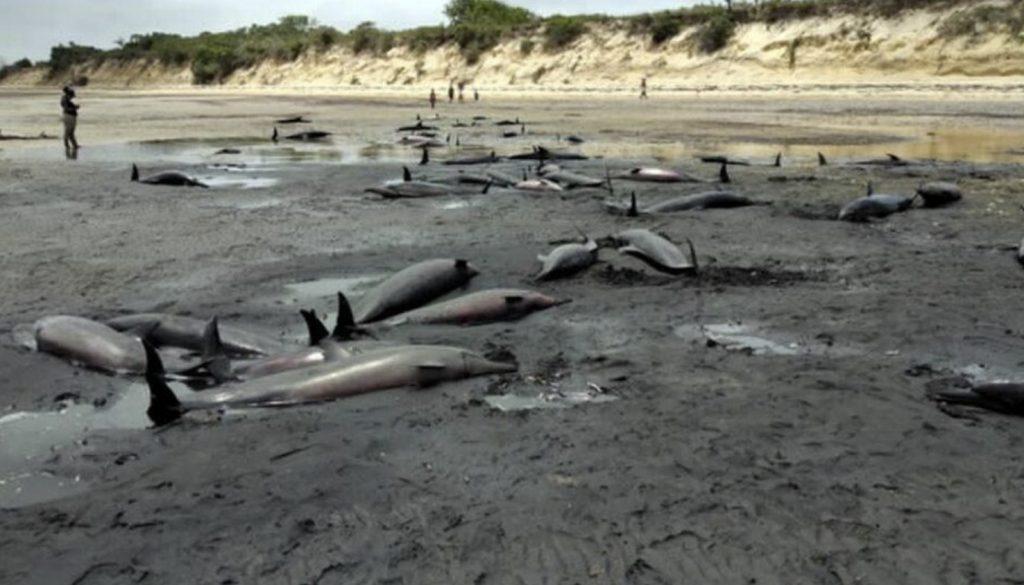 dead dolphins mozambique, dead dolphins mozambique video, dead dolphins mozambique solar storm, dead dolphins mozambique solar minimum