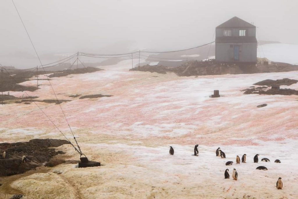 red green snow antarctica, red green snow antarctica february 2021, red green snow antarctica pictures, red snow antarctica february 2021, green snow antarctica february 2021