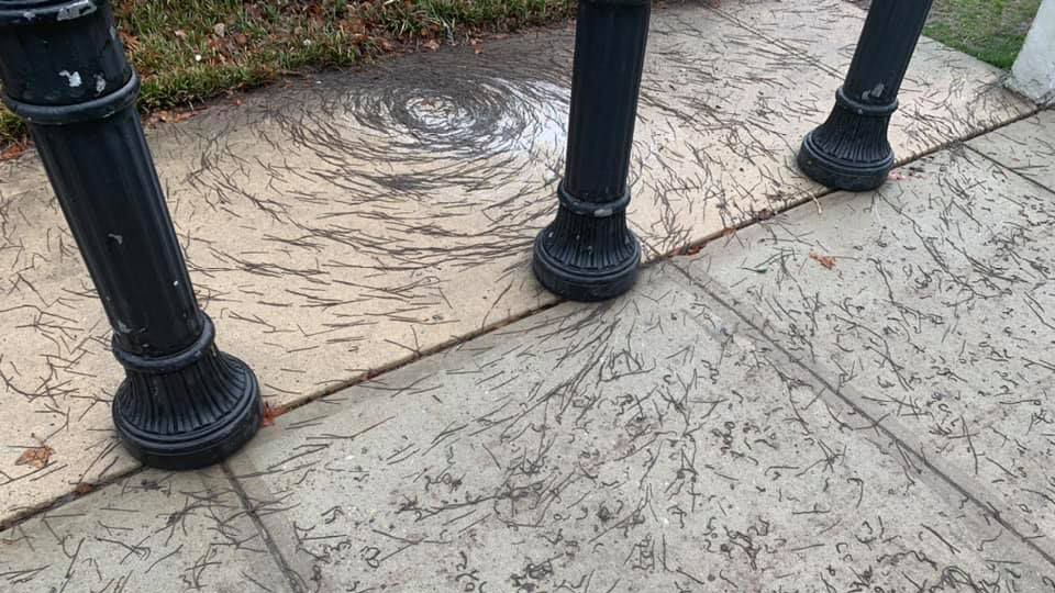 """Worms spread across the sidewalk and into the road, but they were densest in the """"tornado"""" spiral."""