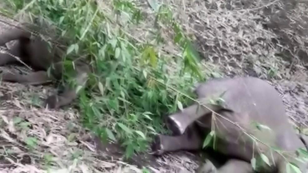 18 elephants killed by lightning, 18 elephants killed by lightning india, 18 elephants killed by lightning assam, 18 elephants killed by lightning may 2021, 18 elephants killed by lightning video, 18 elephants killed by lightning pictures