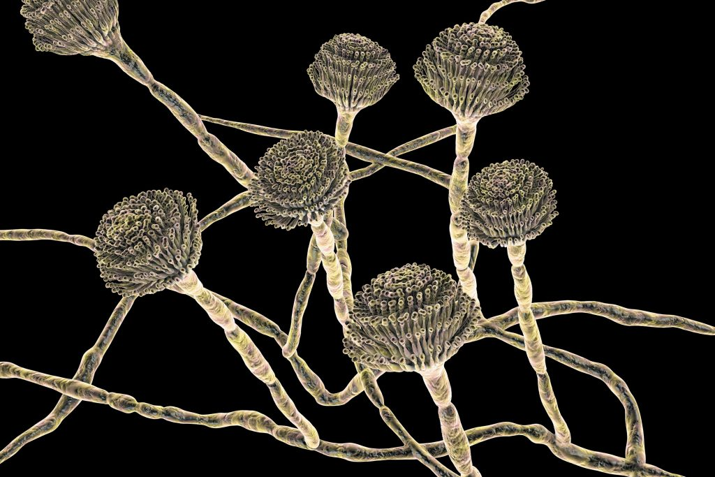 deadly fungi spread around the world