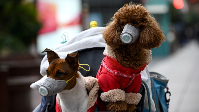 new coronavirus from dog malaysia, A previously unknown novel coronavirus capable of infecting people has been discovered in Malaysia