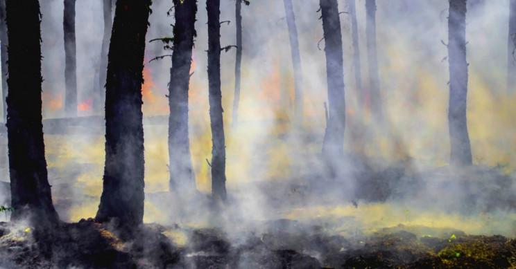 siberia zombie fire, Zombie fire in Siberia, zombie peat fire, zombie peat fire video, zombie peat fire photo