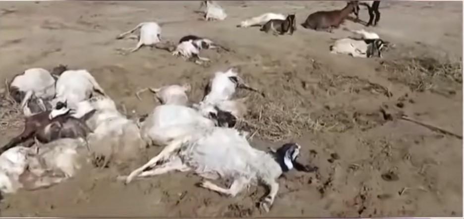 apocalyptic hailstorm pakistan, apocalyptic hailstorm pakistan kills cattle, hundreds of cattle killed by apocalyptic hail storm pakistan