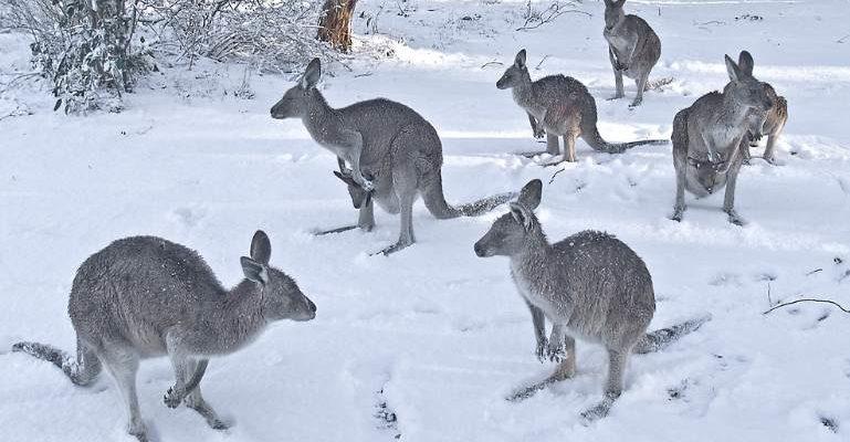 australia snow, australia snow storm, australia snow winter storm, australia snow winter storm june 2021, australia snow winter storm june 8-10 2021