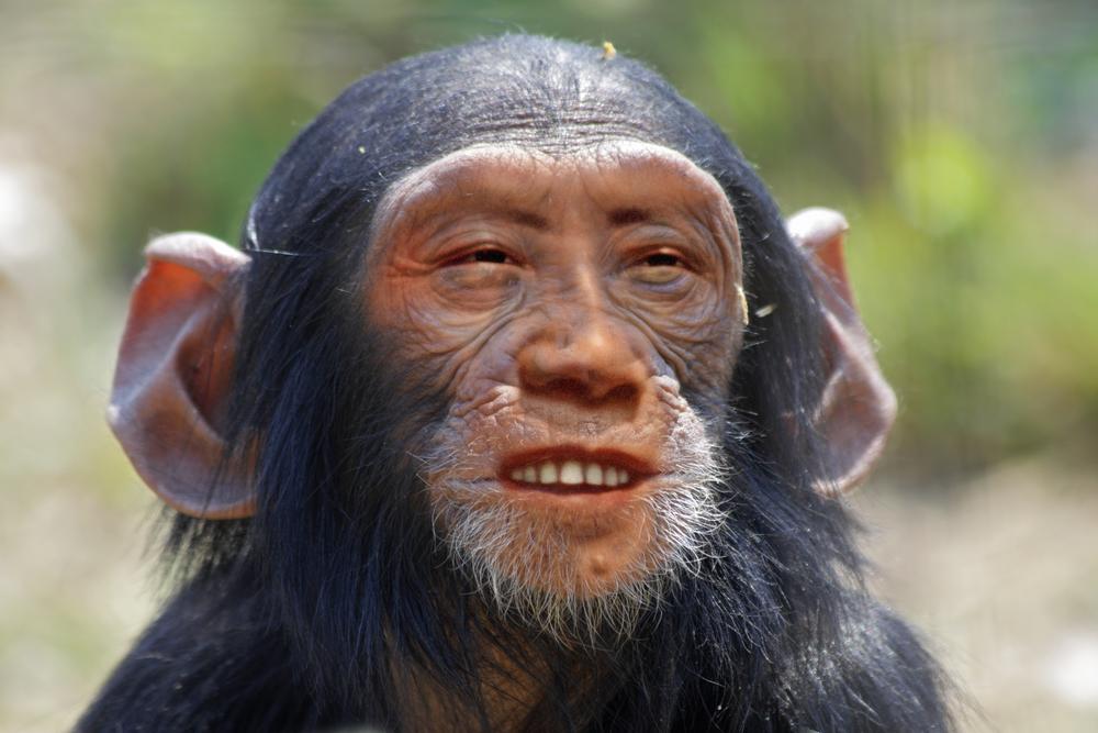Man-monkey hybrid sparks fears of 'Frankenstein' creatures