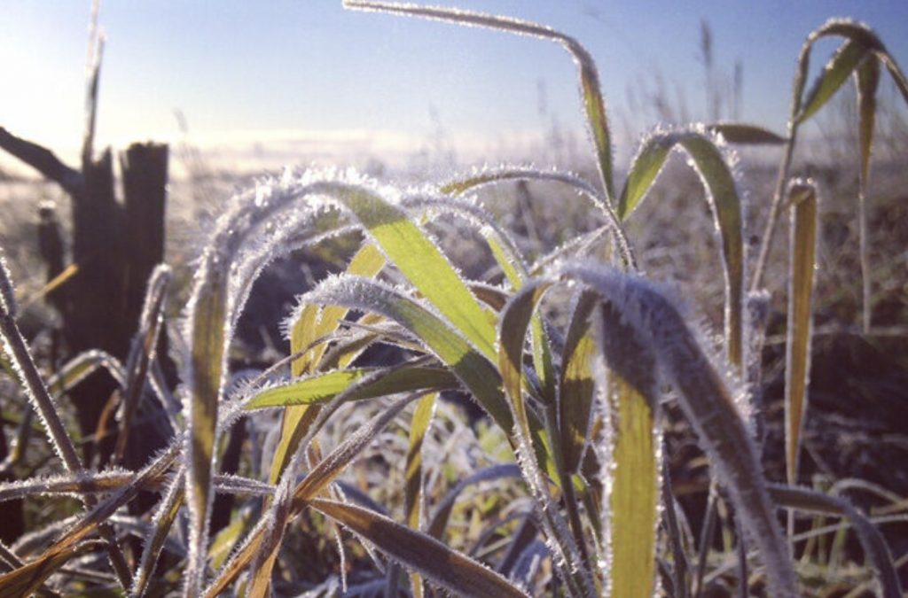 Historic crop loss expected as new frosts hit Brazilian corn areas
