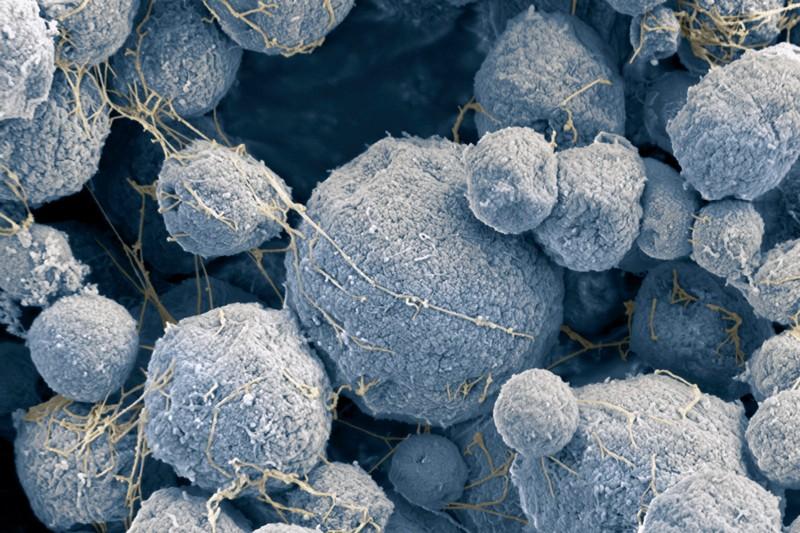 Massive DNA 'Borg' structures perplex scientists