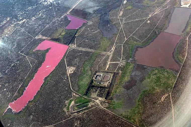 lagoon turns pink in Argentina laguna corfo, lagoon turns pink in Argentina laguna corfo video, lagoon turns pink in Argentina laguna corfo july 2021, lagoon turns pink in Argentina laguna corfo pictures, laguna corfo pink