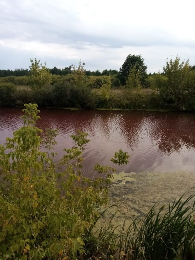Pond turns blood red in Russia, Pond turns blood red in Russia photo, Pond turns blood red in Russia pictures, Pond turns blood red in Russia august 2021