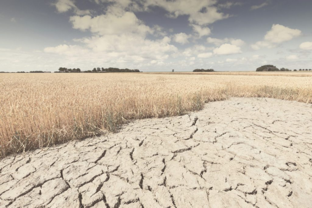 Drought Continues to Impact U.S. Crops, Drought Continues to Impact U.S. Crops maps, Drought Continues to Impact U.S. Crops video