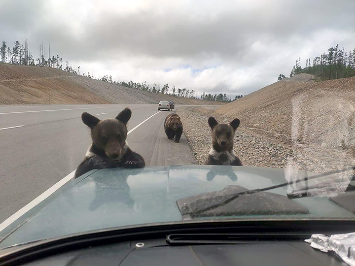 fire yakutia, fire russia, august 2021