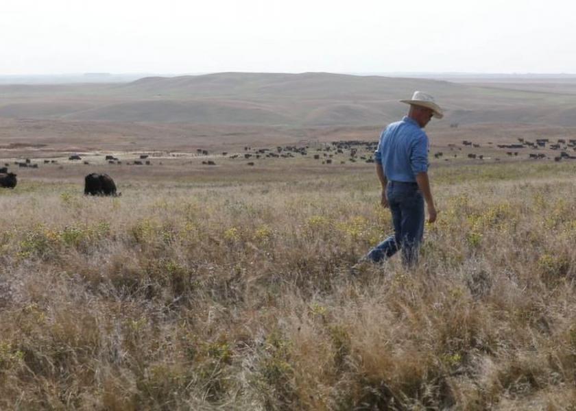 58 pregnant cows killed in North Dakota