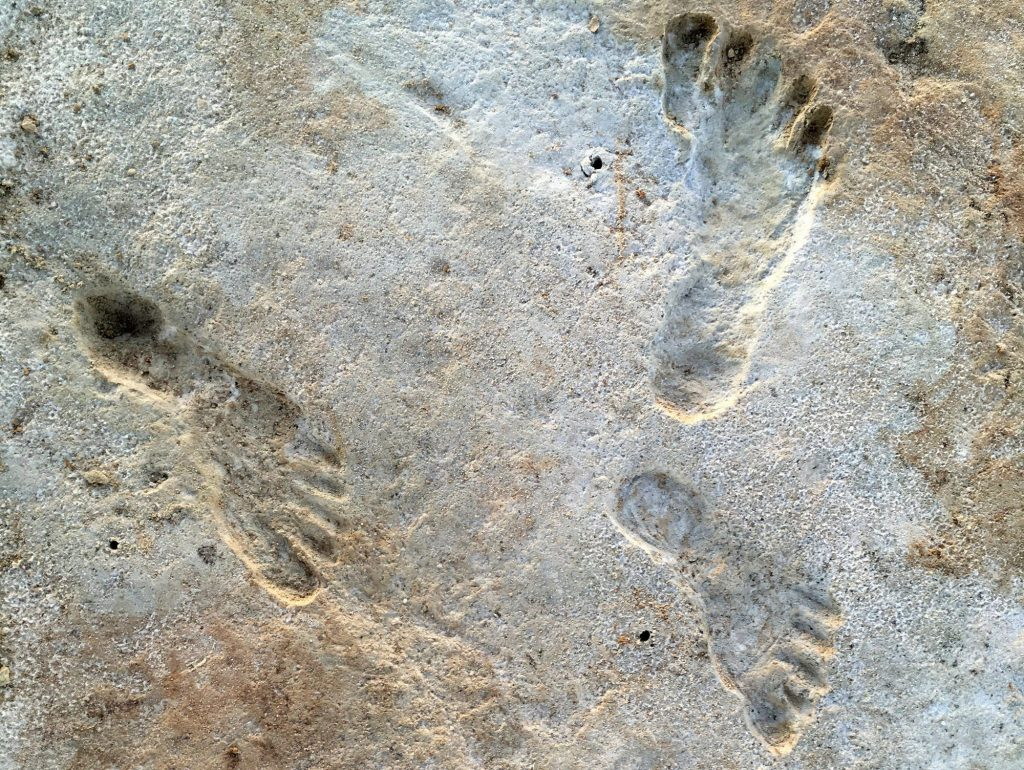 Newly discovered fossil footprints in New Mexico show humans were in North America thousands of years earlier than we thought