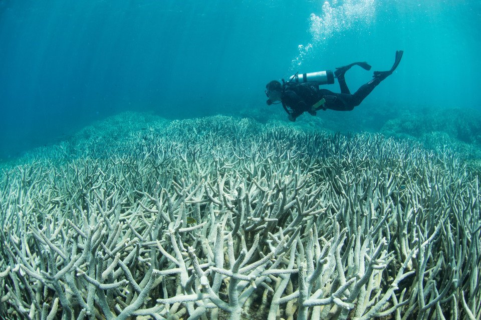 great barrier reef recovery 2021